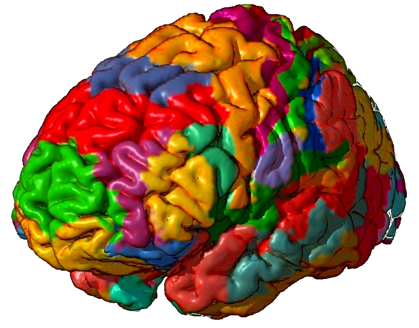 ¿Usamos solo un 10% de nuestra capacidad cerebral?