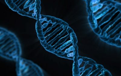 Nuevo gen asociado al envejecimiento cerebral