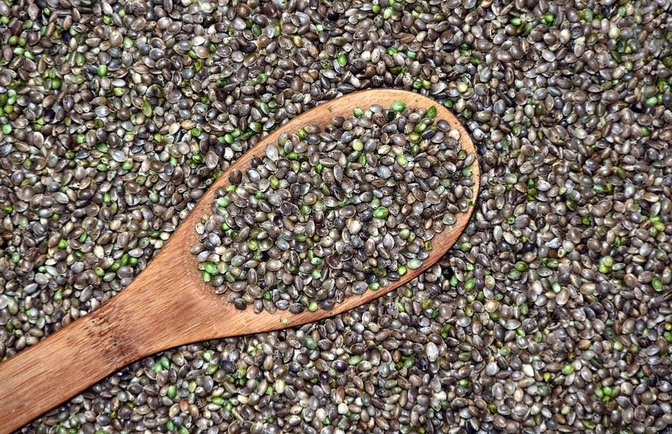 Las semillas de cannabis tienen propiedades beneficiosas para el cerebro.